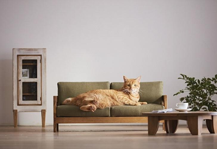 집안 가구를 엉망으로 만드는 고양이에게 대처하는 완벽한 해결책(thumbnail)