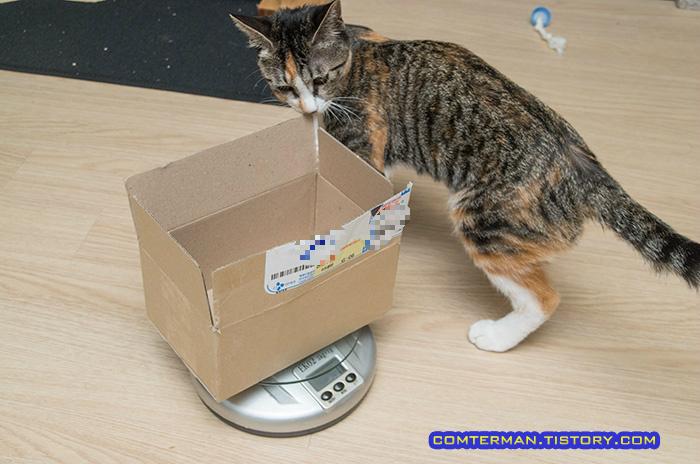 고양이 몸무게 측정