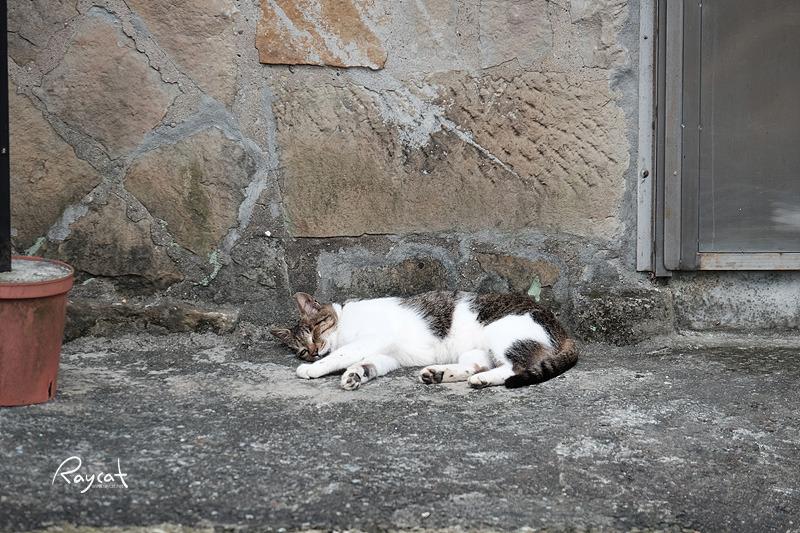 허우통 고양이 마을의 고양이2