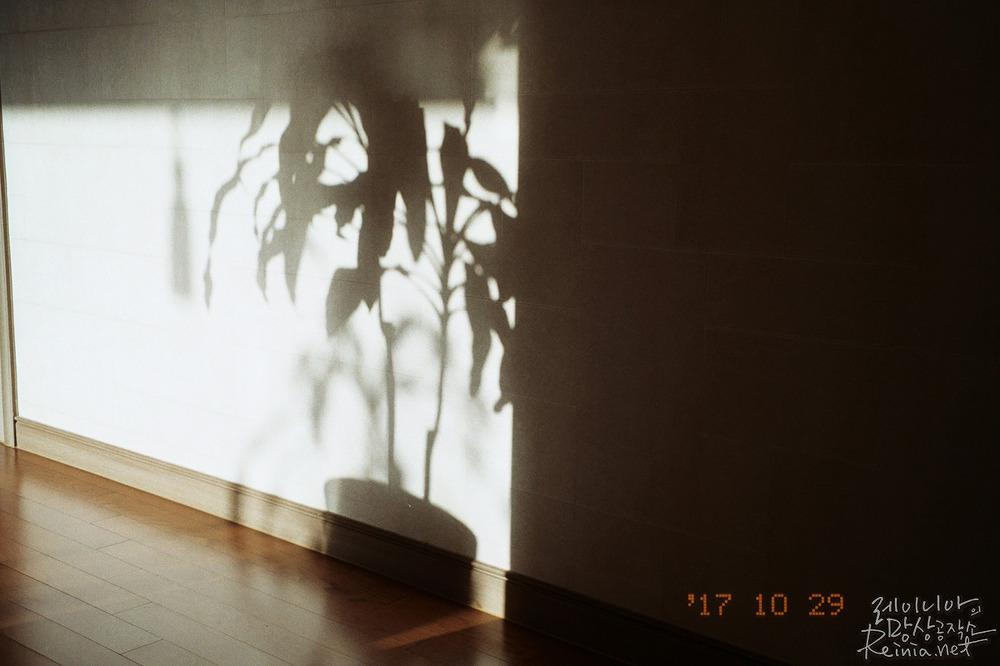 실내, 후지C200으로 촬영