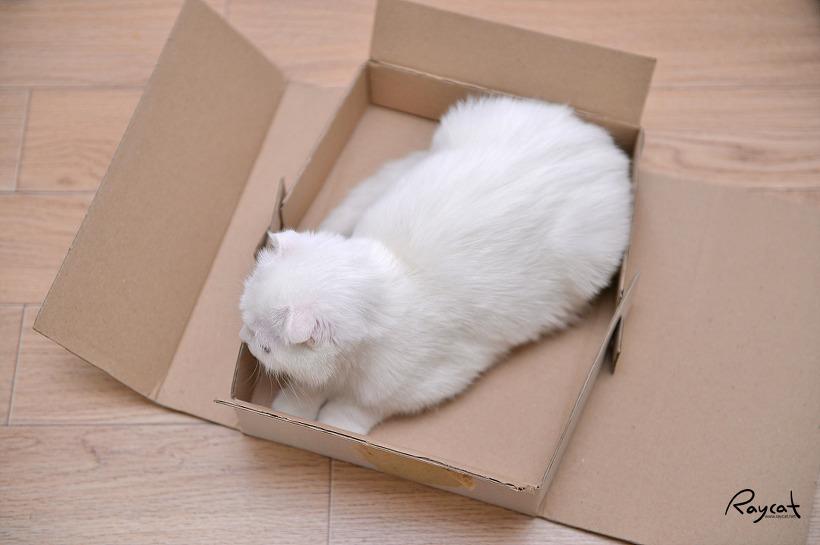 고양이는 모두 박스를 좋아하지
