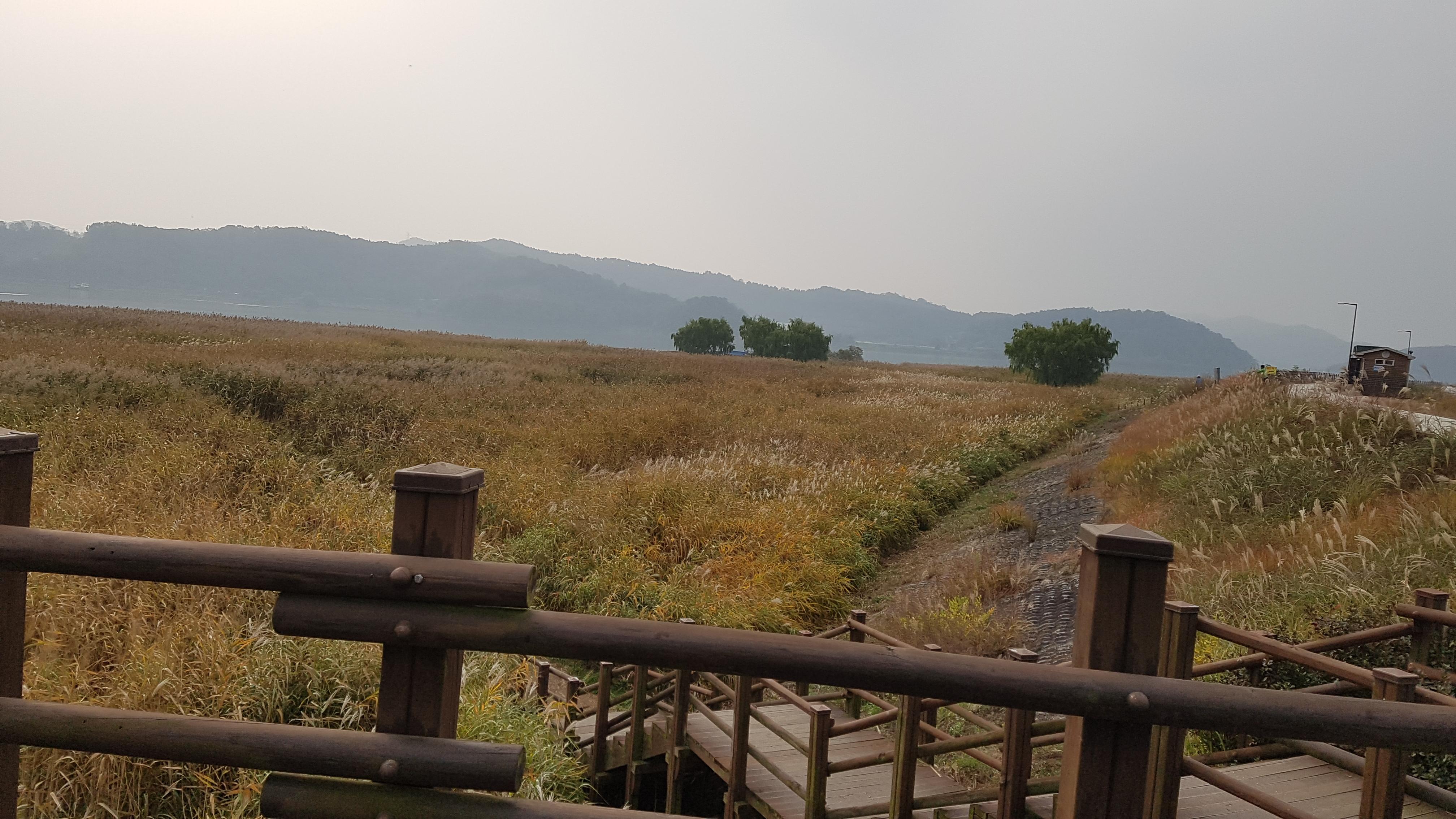 #신성리갈대밭 #신성리갈대숲