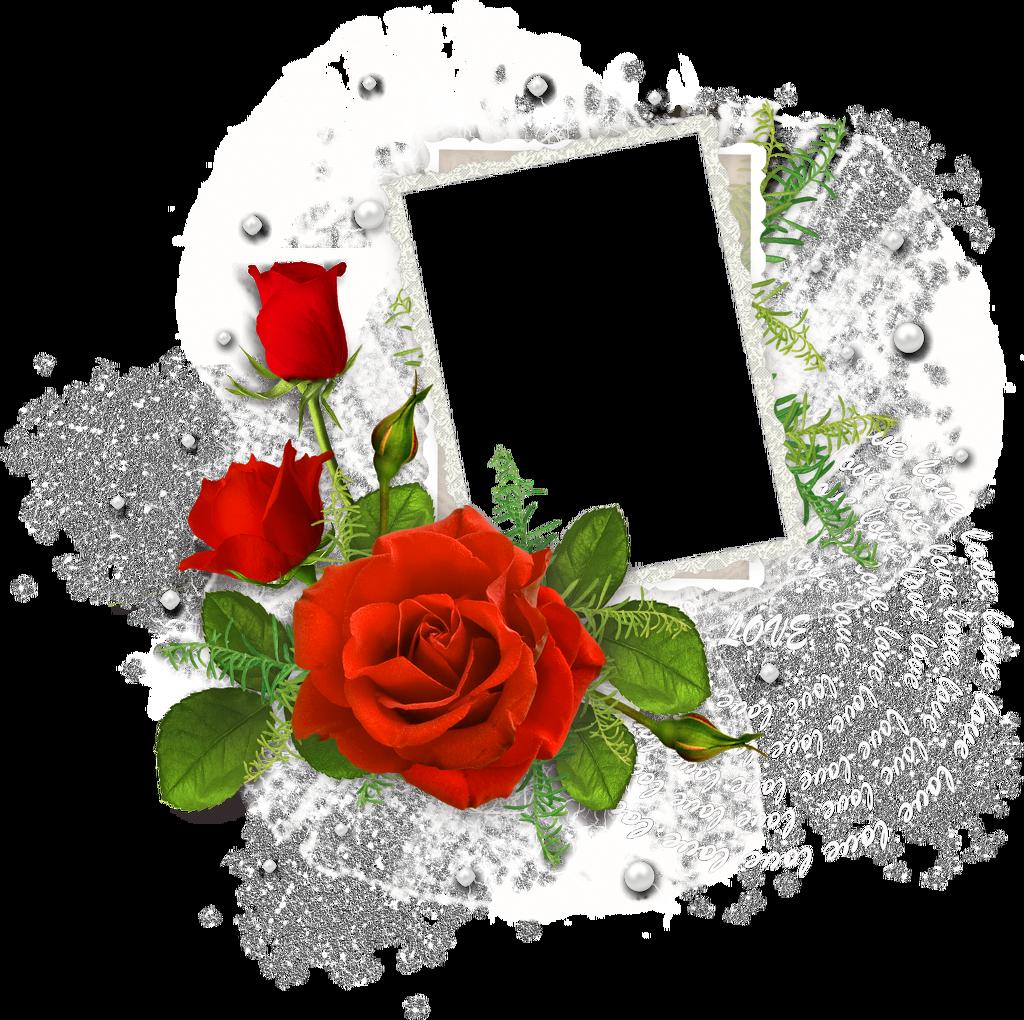 Rose 7 - Image bouquet de roses gratuit ...
